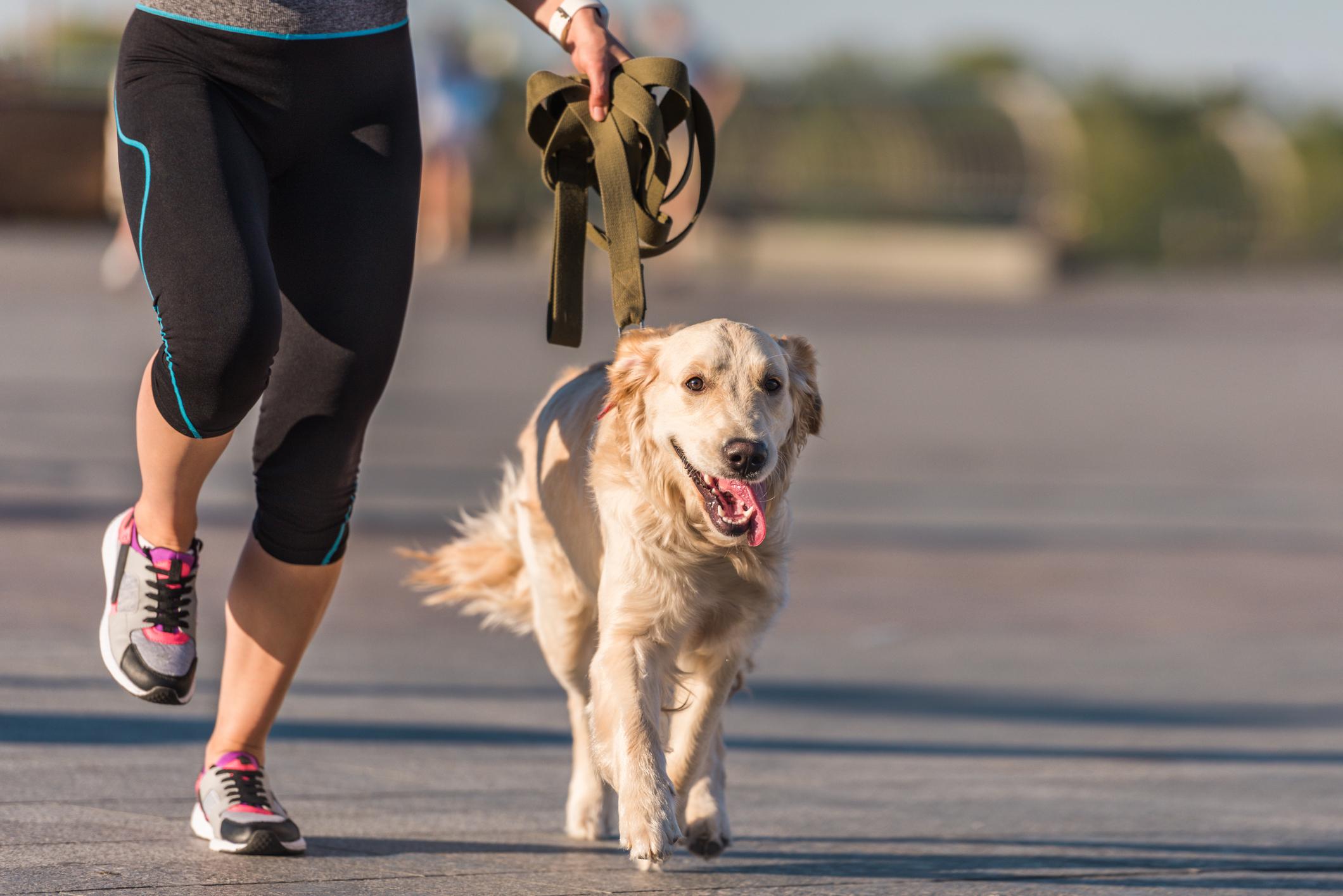 Shamrock Shuffle Paws 3K Run/Walk